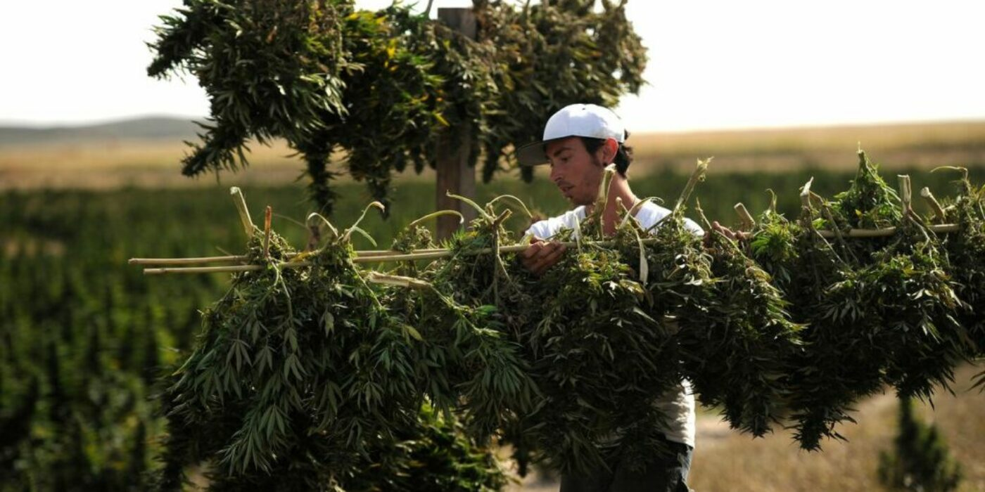 """""""Cannabis Treats COVID-19"""" Rallied Weed Stocks. Cannabis Could Aid Pandemic—If Someone Pays To Find Out."""