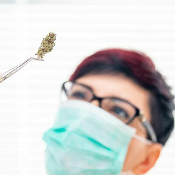 Cannabis May Reduce Deadly COVID-19 Lung Inflammation: Researchers Explain Why